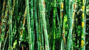 Le forset vert de bambo Photos libres de droits