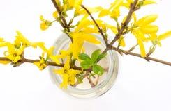 Le forsythia de fleur photographie stock