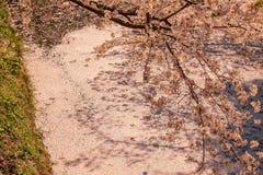 Le fossé intérieur du ` s de château de Hirosaki a rempli de fleurs de cerisier petalsmay s'appelle le ` de Hanaikada de ` ou le  images stock