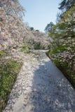 Le fossé intérieur du ` s de château de Hirosaki a rempli de fleurs de cerisier petalsmay s'appelle le ` de Hanaikada de ` ou le  images libres de droits