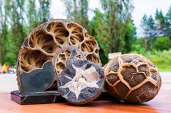 Le fossile d'ammonite dans la roche Photographie stock libre de droits