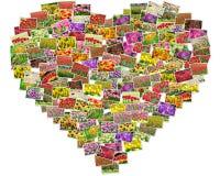 Le foto dei tulipani hanno sistemato nella forma del cuore Immagini Stock