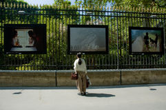 Le foto whatching della donna exibited sulla rete fissa Fotografia Stock