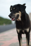 Le foyer mou le chien et les yeux de chien seul se tiennent Image libre de droits