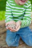 Le frö för pojkevisningsolros royaltyfri fotografi