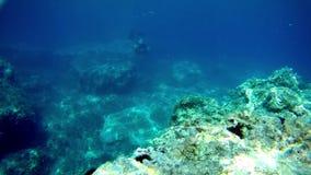 Le freediver nage sous l'eau contre la roche clips vidéos