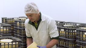 Le fromager beau v?rifie l'assaisonnement de fromages ? l'usine de laiterie dans la vid?o de 4k UHD clips vidéos