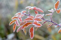 Le Frost. Image stock