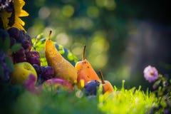 Le fruit de verger d'automne cultive le coucher du soleil d'herbe Photographie stock