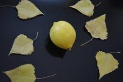 Le fruit frais, citron jaune avec le peuplier jaune part sur un fond noir brillant Photo libre de droits