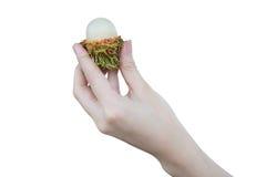 Le fruit frais de ramboutan chez la participation de main de la femme a épluché l'isolat de ramboutan sur le fond blanc, pour le  image libre de droits