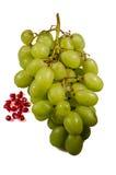 Le fruit frais pour vous Photographie stock