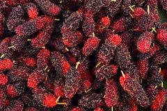 Le fruit mûr de mûre est un fruit doux et aigre sur la nourriture saine de fruit de mûre de fond blanc d'isolement image libre de droits