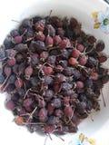 Le fruit sec, fruit d'aubépine, plantes médicinales, fruit médicinal sec, porte des fruits pour la compote, thé sain, promotion d Photos stock