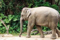 le géant d'éléphant du découpage 3d au-dessus du chemin rendent l'ombre blanche Photos stock