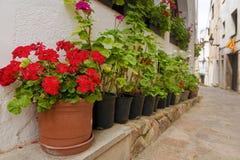 Le géranium fleurit sur les rues de la vieille ville espagnole image libre de droits