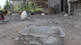 Le galline ed i galli stanno camminando nel pollaio sul video del timelapse dell'azienda agricola archivi video