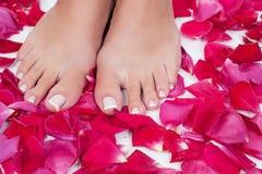 Le gambe della bella donna con i petali di rosa rossa Fotografia Stock
