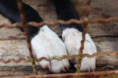 Le gambe di un cane nero Immagine Stock