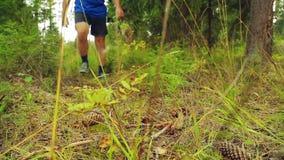 Le gambe di un uomo in scarpe da tennis nella foresta oltrepassano i rami asciutti sulla terra video d archivio