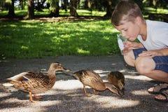 Le garçon alimente les canards sauvages Image libre de droits