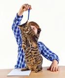 Le garçon apprenant pour l'école a une coupure et joue avec son chat Images stock