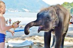 Le garçon avec les cheveux blancs alimente à des bananes l'éléphant sur la plage Image libre de droits