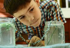 Le garçon de la préadolescence désireux élèvent la cristallisation en cristal de montre de sel de la solution images libres de droits