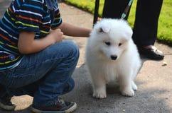 Le garçon heureux de sourire joue avec un chien mignon, un chiot japonais blanc de spitz, sur la rue un jour ensoleillé d'été Photos libres de droits