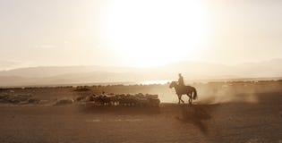 Le garçon mongol a conduit le troupeau de sheeps Image libre de droits