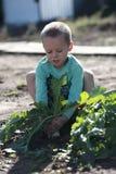Le garçon retire de la terre un grand radis Images stock