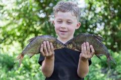 Le garçon tient la brème de deux poissons Image stock