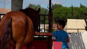Le garçon touche un cheval brun lié dans une stalle banque de vidéos
