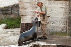 Le gardien de zoo f le zoo de Vienne alimente l'otarie image libre de droits