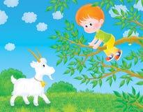 Le garçon se sauvegarde d'une chèvre Photos libres de droits