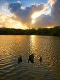 Le Gearagh Photographie stock libre de droits