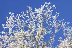 Le gel a couvert l'arbre Image libre de droits