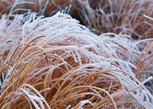 Le gel a couvert l'herbe Images libres de droits
