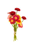 Le gerber coloré fleurit le bouquet sur le fond blanc Photos stock