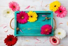 Le gerbera coloré fleurit sur la boîte bleue sur un fond en bois blanc Vue supérieure Copiez l'espace Image stock