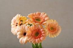Le Gerbera fleurit le bouquet photographie stock libre de droits