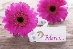 Le Gerbera rose de ressort, label, moyens de Merci vous remercient photographie stock libre de droits