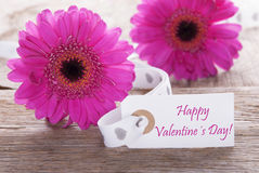 Le Gerbera rose de ressort, label, textotent le jour de valentines heureux Images stock