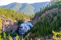 Le gibbon tombe en stationnement national de Yellowstone image libre de droits