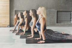 Le giovani donne nell'yoga classificano, allungamento di posa della cobra Immagine Stock