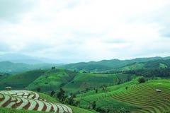 Le gisement en terrasse vert de riz à la PA bong le village de piang, Chiangmai, Thaïlande photographie stock libre de droits