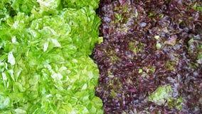 Le gisement frais de salade mixte verdit la vue empil?e de plan rapproch? photos libres de droits
