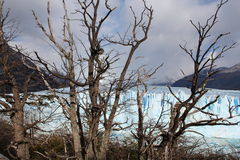 Le glacier Perito Moreno Photos stock