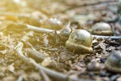 Le gland dans le feuillage d'automne, chute part du fond image stock