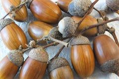 Le gland est un fruit de chêne, famille de hêtre Mûrissez en automne images stock